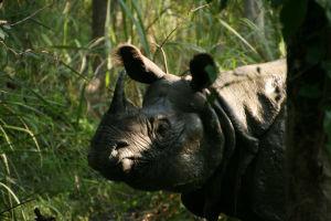 Nepal - Chitwan National Park