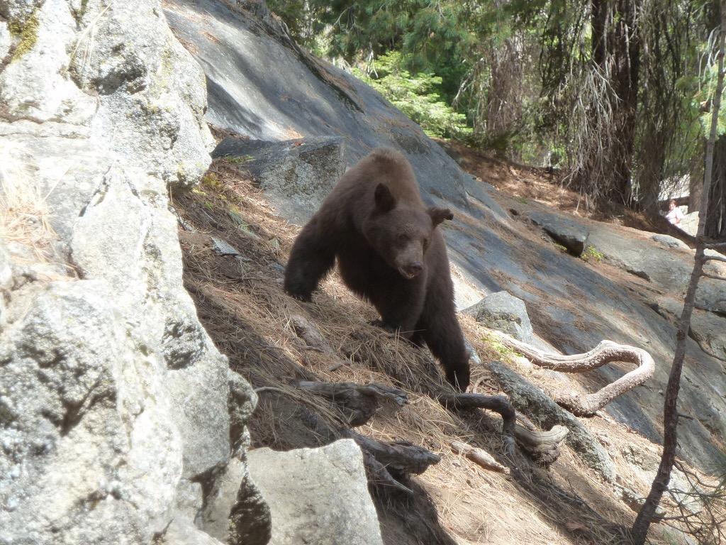 California - Sequoia National Park