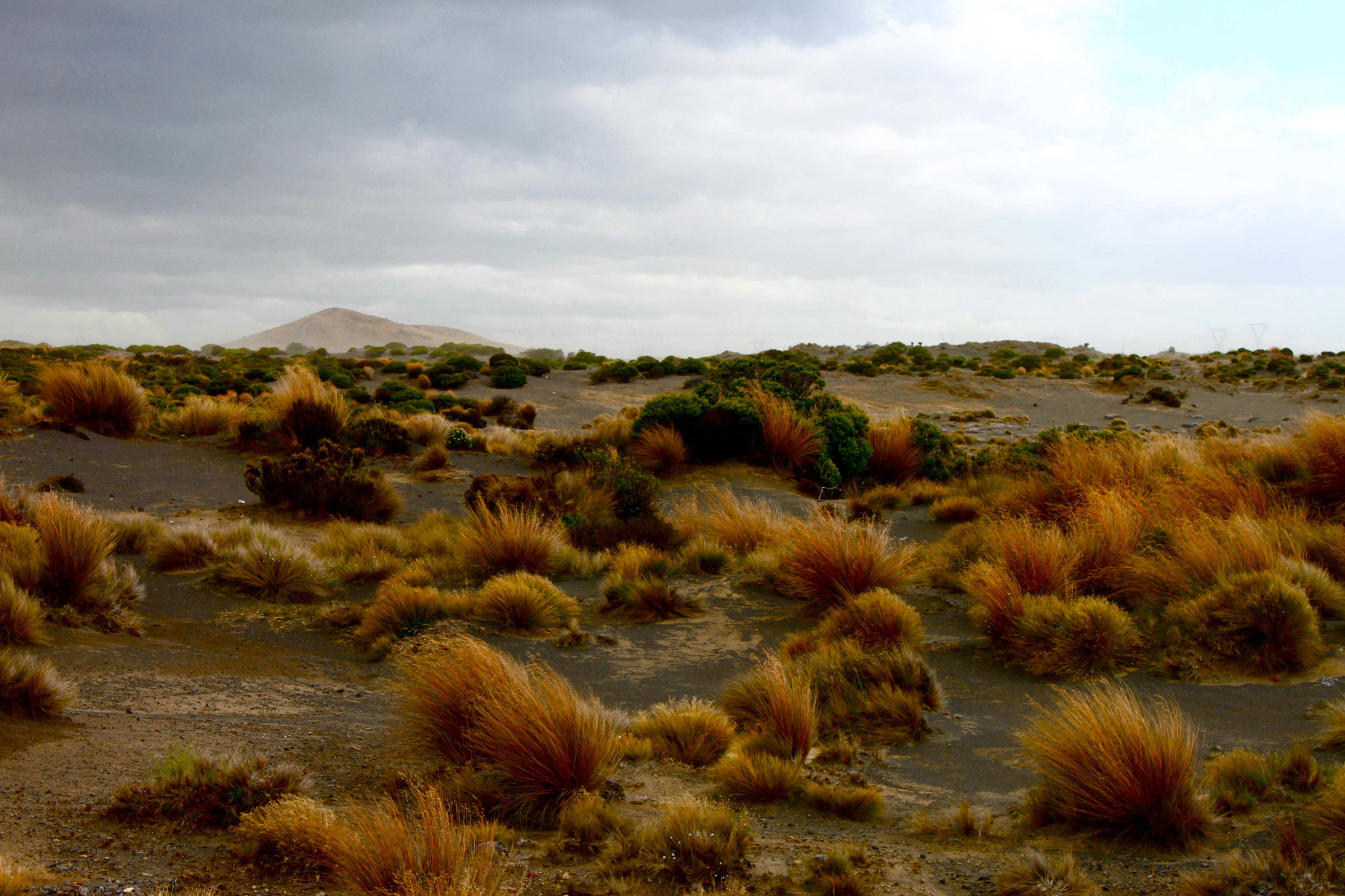 New Zealand - Red Desert